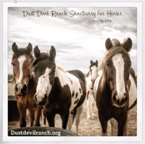 Adult T-Shirt with Dust Devil Ranch Sanctuary for Horses Print