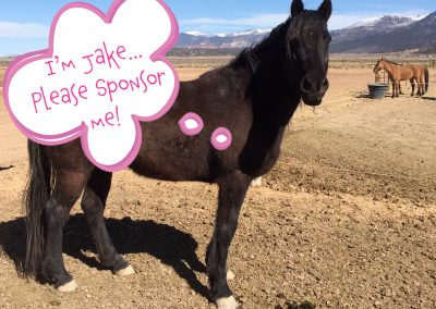 Jake - Dust Devil Ranch Sanctuary for Horses