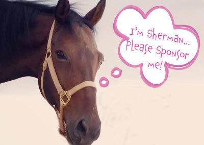 Sherman - Dust Devil Ranch Sanctuary for Horses